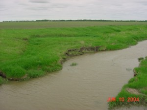 Rush nr confluence north bank (2)