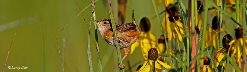 bird-big-bluestem-and-blackeyed-susan