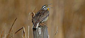 bird-posr